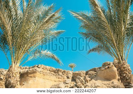 Looking through palm leaves at the picturesque dream beach with white sand, golden granite rocks, palm trees and a blue sky. Egypt