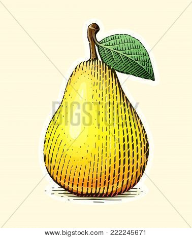 Pear with leaf. Fruit in vintage engraving style. Vegetarian healthy food. Natural organic product. Eps10 vector illustration.