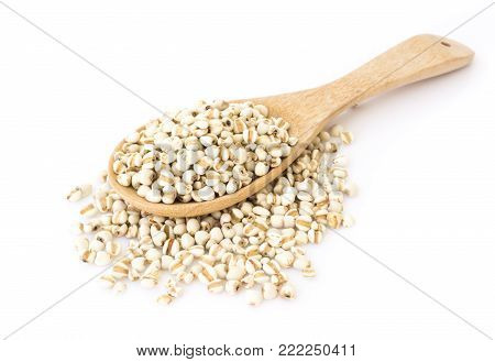 Job's tears on wood spoon with white background, healthy food concept