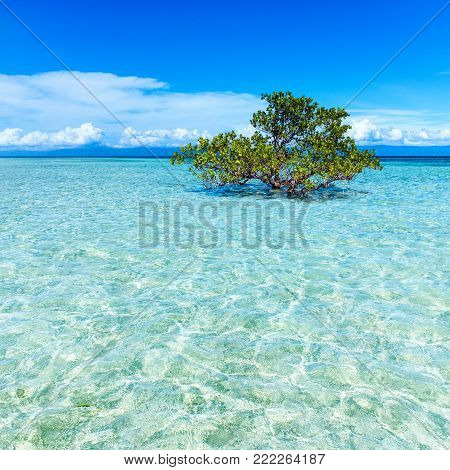 Surreal tropical island sea scape with tree in middle of tropical lagoon.Transparent blue water surrounding tree with clear sky.