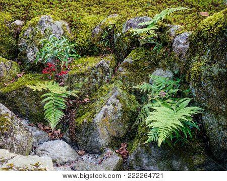 Grass with rocks at Japanese zen garden in summer day.