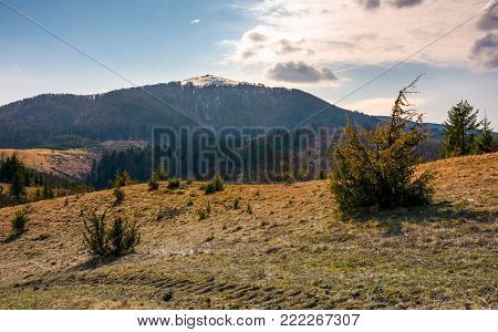 mountain with snowy peak in springtime. forested hillsides with weathered grass.