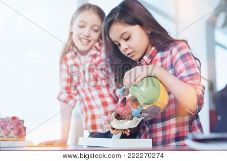 Smart kids. Vibrant intelligent fancy girls examining special plastic model of a scull while attending biology class and working on practical assignment
