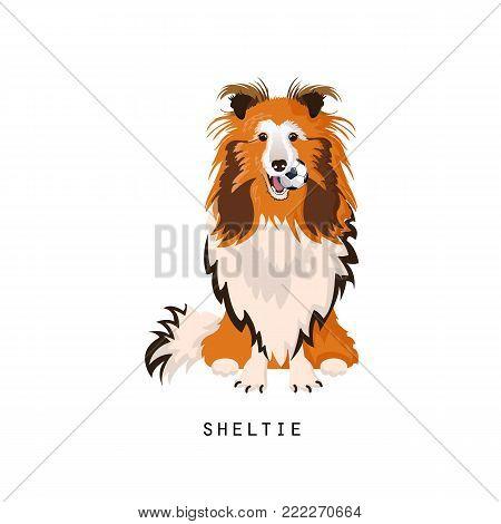 Beautiful furry human friend, home animal and decorative dog: cute cartoon fluffy sheltie, home pet. Shetland sheepdog or shetland collie. Noble, balanced, faithful dog. Vector illustration isolated.