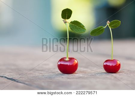Two 2 red cherry berries with green leaf. Ripe cherries fruit macro view photo. Selective focus, shallow depth of field. Beautiful bokeh background