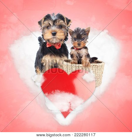 mother and cub yorkshire terrier share a love cloud, mother's day concept or valentine's day