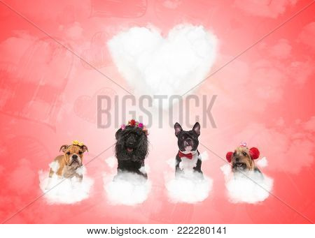 four adorable dogs on puffy clouds with big heart in the background, valentine's day concept