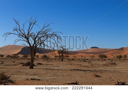 Death tree with red dunes from Hidden Vlei, Sossusvlei Namibia
