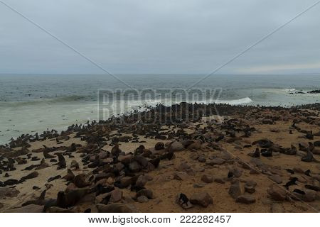 Colony of cape fur seals from Cape Point, Namibia