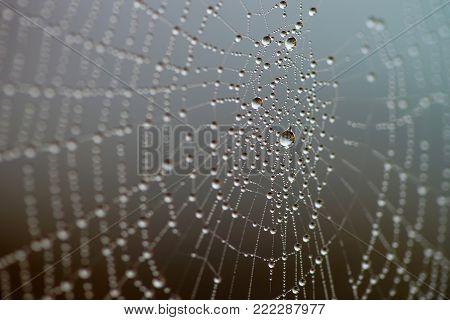 Cobweb with rain drops. Macro of water dew drop.
