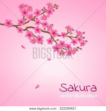 A branch of blooming cherry blossom with falling petals. Sakura flowers on a pink background. Vector illustration. Design for a poster, wedding invitations, postcard, banner. Vector illustration.