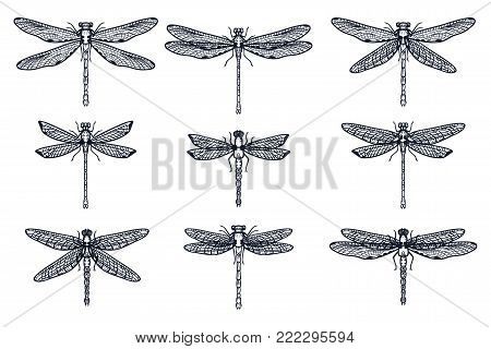 Set of Hand drawn stylized dragonflies outline isolated on white background. Suitable for coloring or illustration for sticker.