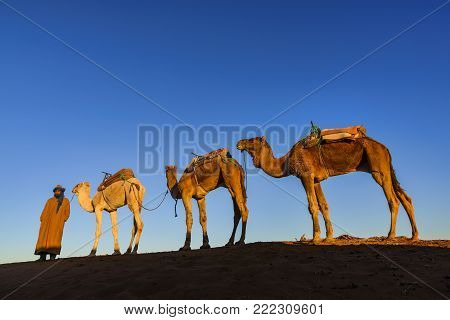 Erg Chegaga, Morocco - December 27, 2017: View of a dromedary caravan with cameleer. Dromedaries are used in tourist activities such as rides or picture taking