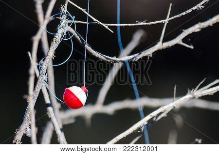 Fishing Bobber Entangled in the Dried Tree Branches