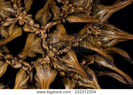 Nature Abstract: Close Look at the Seed Pod of a Sweetgum Tree