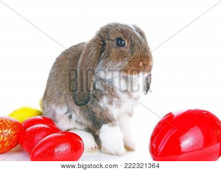 Easter bunny rabbit lop with eggs on isolated white background. Cute.