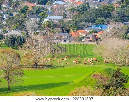 Mount Eden village, Mount Eden, Auckland, New Zealand