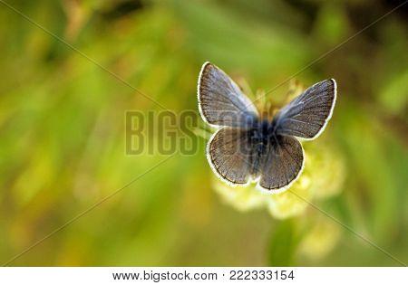 Butterfly portrait wings spread on flower field