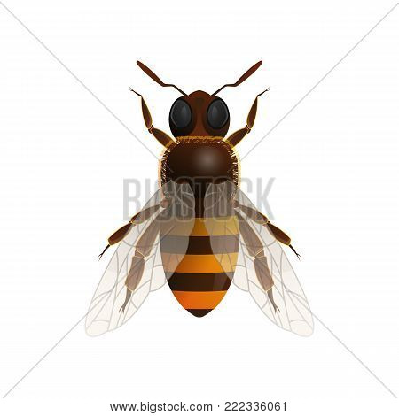 Honeybee isolated icon on white background. Insect symbol for natural, healthy and organic food production vector illustration in cartoon style