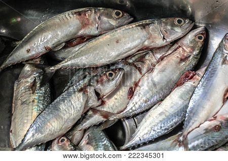 Slicing raw fresh fish ready for cook.Fish and seafood are good sources of protein and are typically low in fat.