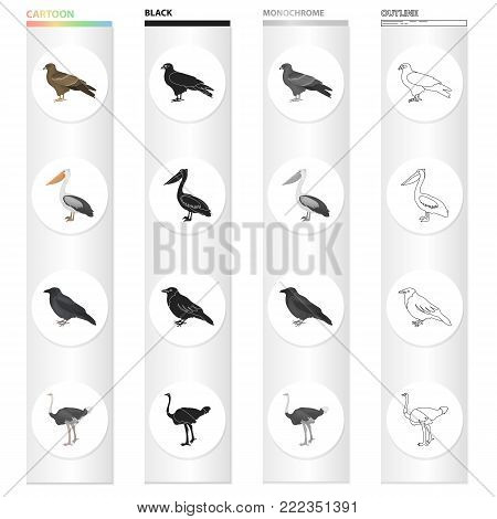 A hawk, a bird of prey, a pelican, a gray crow, an emu ostrich. Bird set collection icons in cartoon black monochrome outline style vector symbol stock illustration .
