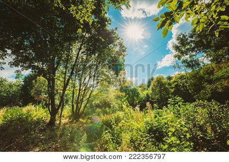 Sun Shining Through Canopy Of Tall Trees. Sunlight In Deciduous Forest, Summer Nature Landscape.