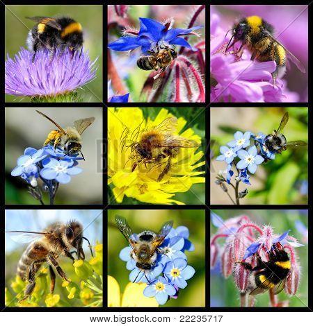 Bees and bumblebees mosaic