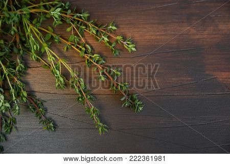 Free place for the inscription. Branch of thyme on a dark wooden board.