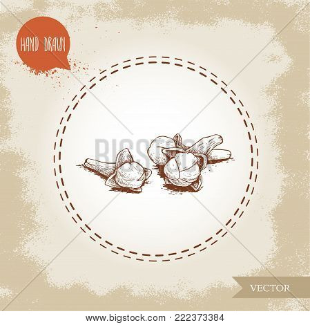Hand drawn sketch style clove spice flower seeds batch. Vector hand made spice and herbs  illustration.