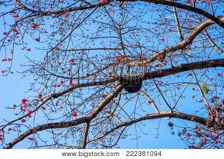 Beehive Aka Bee House On The Tree