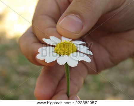 Fingers with yeallow and white flower petals