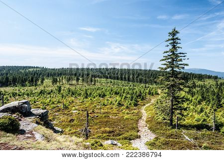 view from Brousek hill in Rychlebske hory mountains on czech - polish borders with rock formation, hiking trail, meadow, forest and Kralicky Sneznik hill on the background