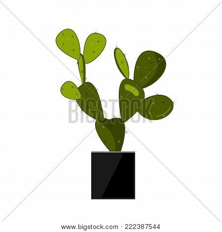 Prickly pear cactus in stylish black pot. Cactus flat vector illustration on white. Home potted flower. Opuntia icon, traditional Mexican plant. Vector