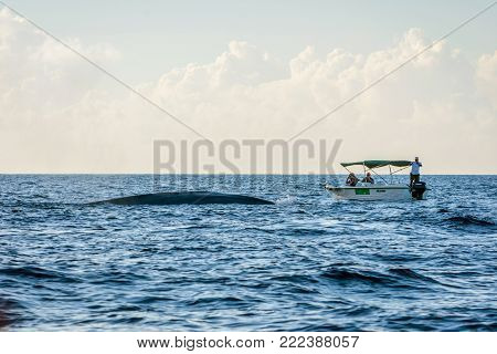 TRINCOMALEE, SRI LANKA - MARCH 9: Group of people observing blue whales from the whale watching boat. March 2017
