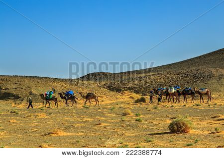 Merzouga, Morocco - February 24, 2016: A Laden Camel Caravan And Three Cameleers, Drivers, Walk Thro