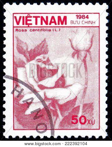 Ukraine - circa 2018: A postage stamp printed in Vietnam show flower Rose or Rosa centifolia. Series: Fauna and Flora. Circa 1984.