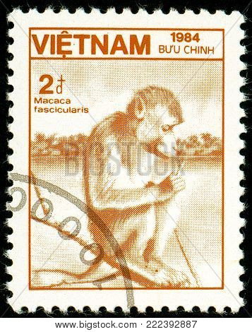 Ukraine - circa 2018: A postage stamp printed in Vietnam show monkey Crab-eating Macaque or Macaca fascicularis. Series: Fauna and Flora. Circa 1984.