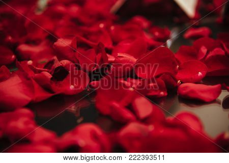 Background of beautiful red rose petals in dark floor