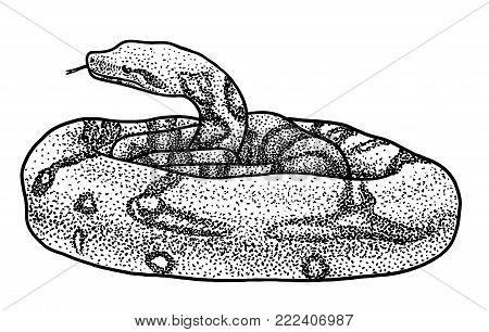 Boa illustration, drawing, engraving, ink, line art