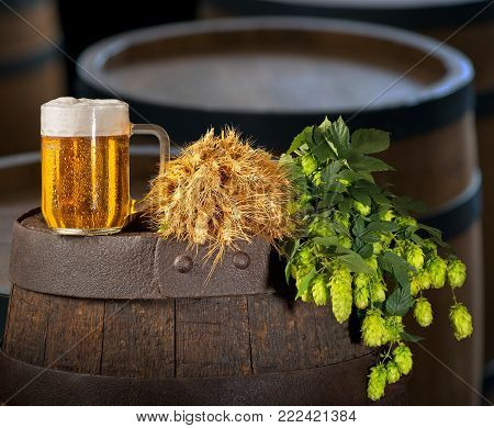 Glass of Beer with Hops and Barley on the Barrel