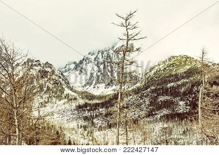 Spruce forest after natural disaster in High Tatras mountains, Slovak republic. Winter natural scene. Travel destination. Yellow photo filter.