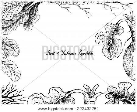 Root and Tuberous Vegetables, Illustration Frame of Hand Drawn Sketch of Fresh Horseradish and Swede Plants Isolated on White Background.