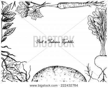 Root and Tuberous Vegetables, Illustration Frame of Hand Drawn Sketch of Fresh Prairie Turnip, Potato and Parsnip Plants Isolated on White Background.