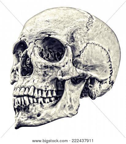 single skull sketch isolated on white background