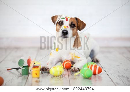 Dog with painted Easter eggs. One pet at home