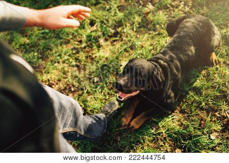 Male cynologist with working dog, training outside