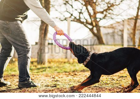 Male cynologist work with trained police dog