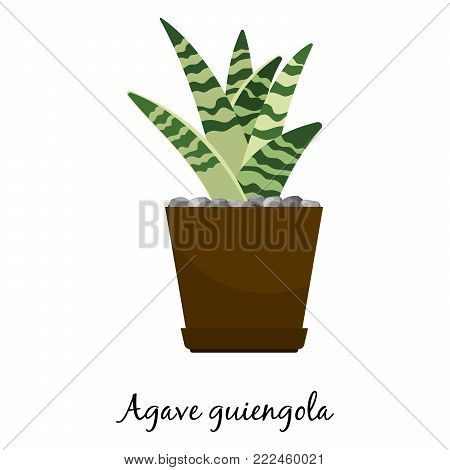 Agave guiengola cactus in pot isolated on the white background, vector illustration