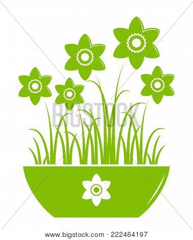 vector daffodils in pot isolated on white background