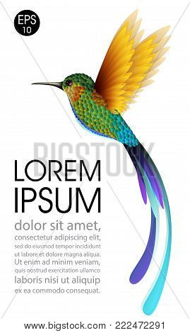 Hummingbird. Vector illustration of exotic flying Colibri Bird isolated on white background for your design